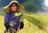 اشتغالزایی بومی ۱۱۴روستای کشور را بدون بیکار کرد